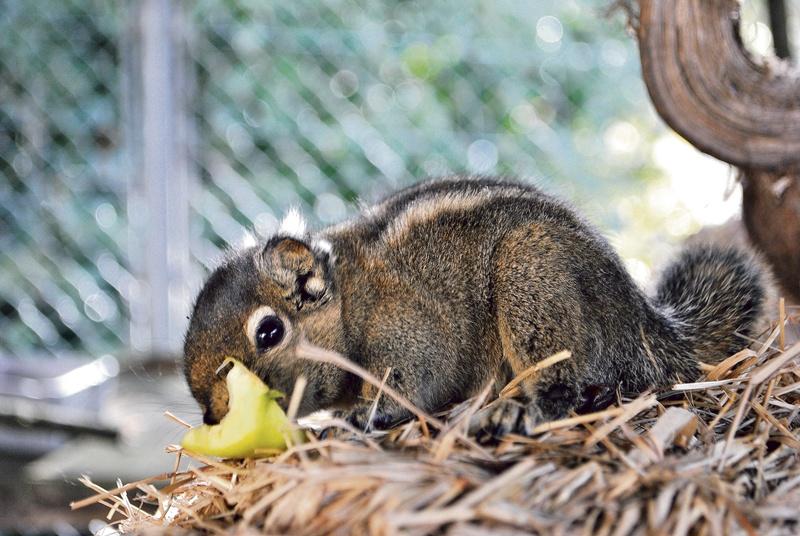 Plättli Zoo: Zwei neue Tierarten